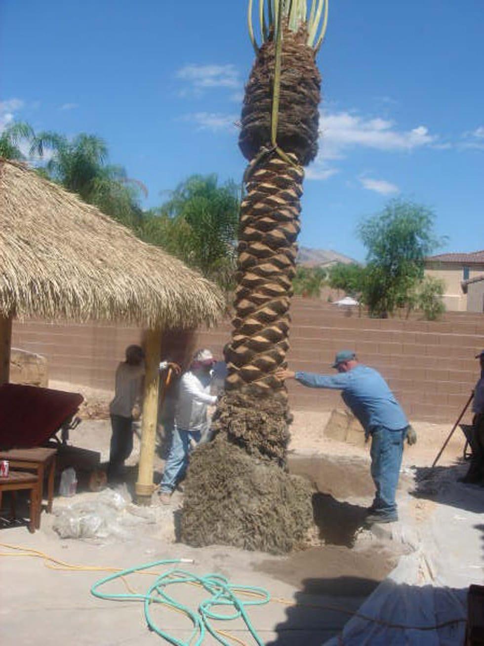 Large Palm Trees Poolscape Tropical Cacti Landscapes