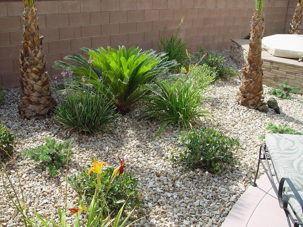 New Installation Semi Tropical Cacti Landscapes