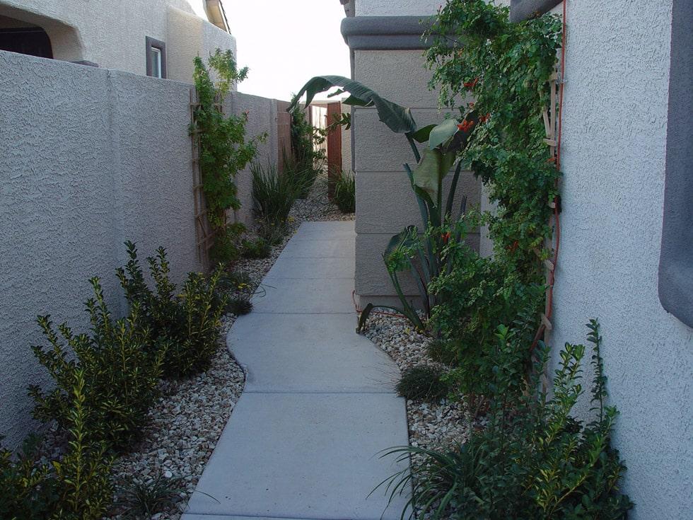 Concrete Patio Trees Amp Tropical Look Cacti Landscapes