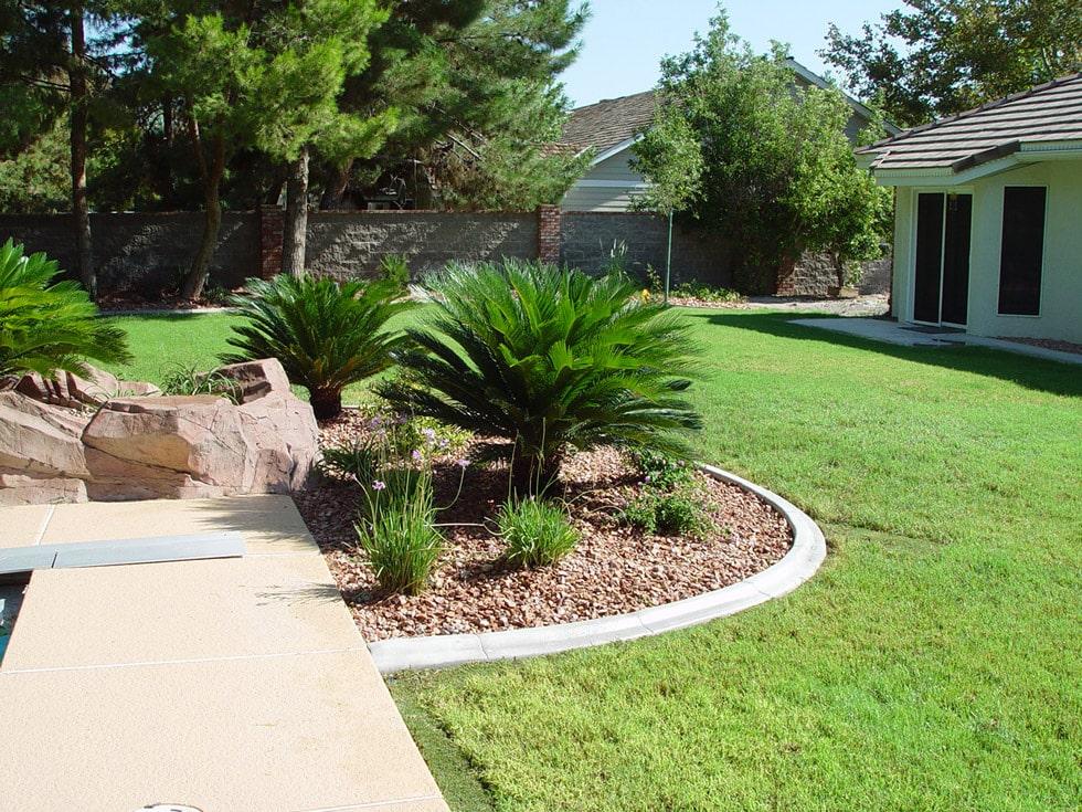 Palm Trees Flagstone Amp Additional Tropical Feel Cacti