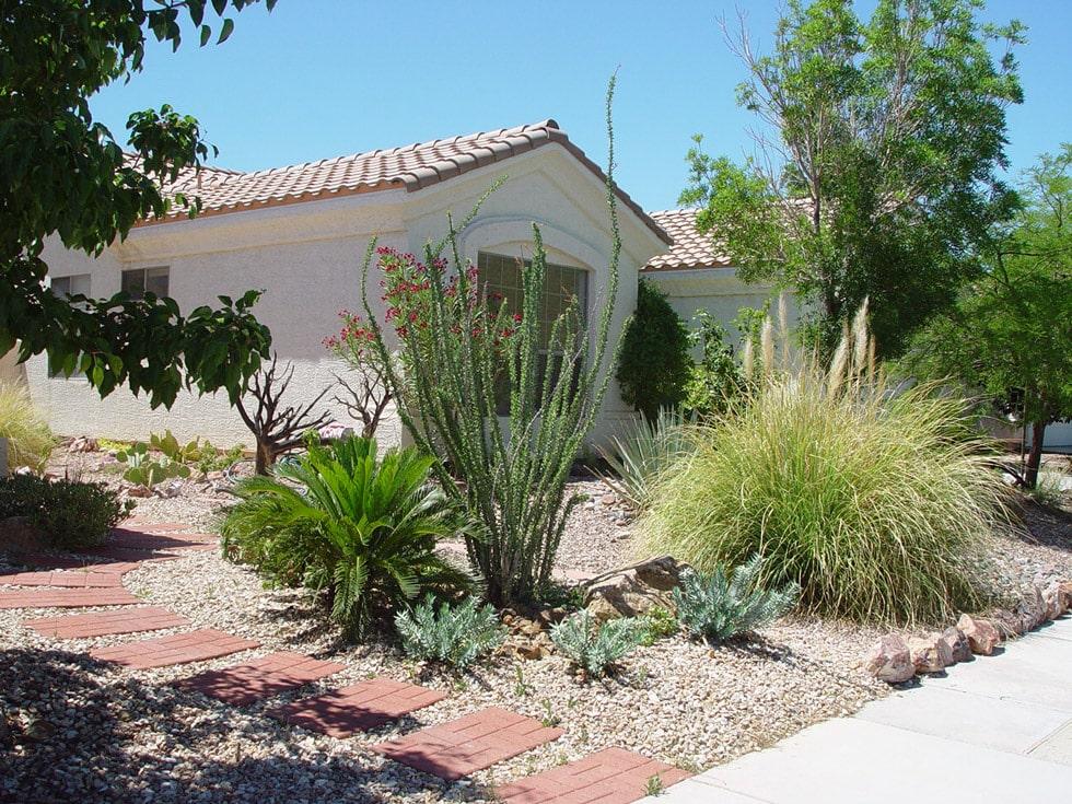 image gallery cacti landscapes las vegas