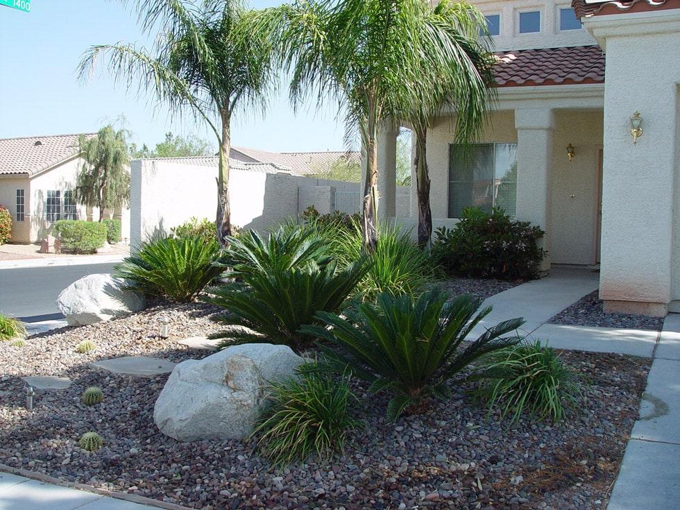 Cacti landscape projects
