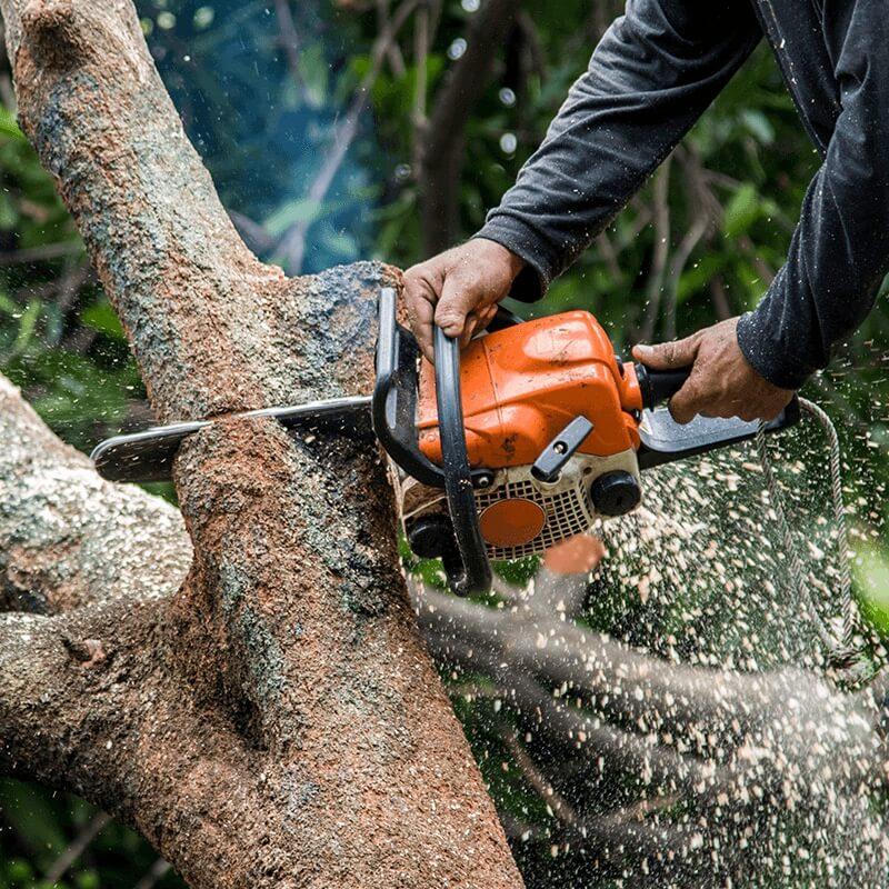 Chainsaw Cutting a Tree